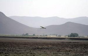 بیشترین تخریب «آقگل» در حوزه مرکزی صورت گرفته است