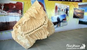 موزه فسیل شیرین سو